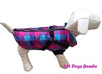 Жилет с шлеей малиново-голубой для собак DogsBomba