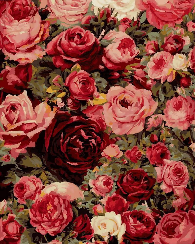 Картина по Номерам 40x50 см. Стена из роз Rainbow Art