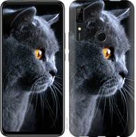 "Чехол на Huawei Y9 Prime 2019 Красивый кот ""3038u-1736-25032"""