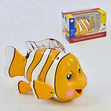 Рыбка 998 (36) ездит, песня на английском языке, с подсветкой, в коробке