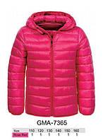 Куртка для девочек, Glo-story, 110,140,160 см,  № GMA-7365