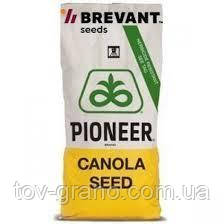 """Семена Рапса """" PT200CL """" ( Pioneer)"""