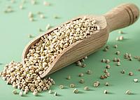 ГРЕЧКА ЗЕЛЕНАЯ Микрозелень, зерно семена гречки органической для проращивания 150 грамм, фото 1