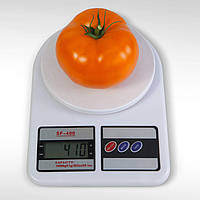 Семена томата Айсан (KS-18) F1 (500 сем.) Kitano, фото 1