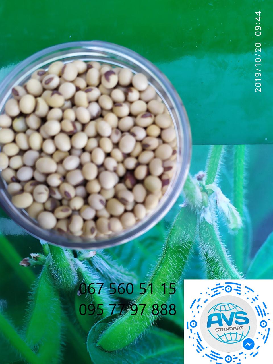 Насіння сорту сої Медісон під гліфосат 4л/га. Посухостійкий сорт з врожайністю 45ц/га. 1 репродукція.