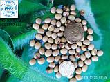 Насіння сорту сої Медісон під гліфосат 4л/га. Посухостійкий сорт з врожайністю 45ц/га. 1 репродукція., фото 3