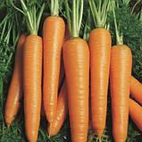 """Семена моркови """"Вита Лонга"""" (1 г) от Bejo, фото 2"""