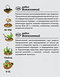 """Насіння редиски """"Всесезонний"""" (3 р) від Agromaksi seeds, фото 2"""