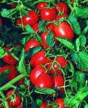 """Насіння томату """"Астерікс F1 (20 насінин) від Syngenta, фото 2"""