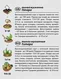 "Семена тыквы ""Гитара"" (2 г) от Agromaksi seeds, фото 3"