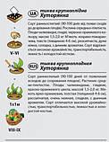 "Семена тыквы ""Хуторянка"" (2 г) от Agromaksi seeds, фото 3"