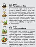 "Семена арбуза ""Полосатый бок"" (2 г) от Agromaksi seeds, фото 2"