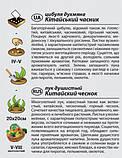 """Насіння цибулі """"Китайський часник"""" (0,5 г) від Agromaksi seeds, фото 2"""