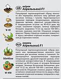 "Семена огурца ""Апрельский"" F1 (0,3 г) от Agromaksi seeds, фото 2"