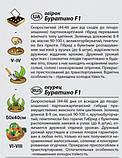 """Семена огурца """"Буратино"""" F1 (0,25 г) от Agromaksi seeds, фото 2"""