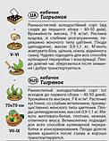 """Насіння кабачка """"Тигреня"""" (2 р) від Agromaksi seeds, фото 2"""