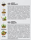 """Насіння огірка """"Їжачок"""" F1 (0,25 г) від Agromaksi seeds, фото 2"""