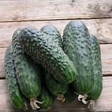 "Семена огурца ""Сатина"" F1 (10 семян) от Nunhems, фото 3"