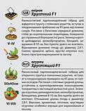 """Насіння огірка """"Хрусткий"""" F1 (0,5 г) від Agromaksi seeds, фото 2"""