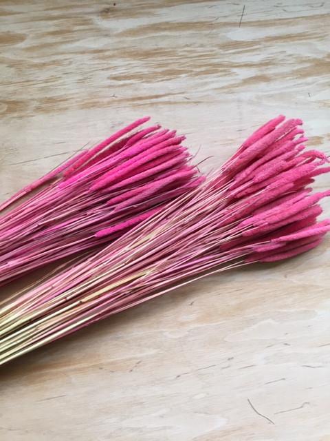 Флум сухоцвет  розовый( 50 шт )