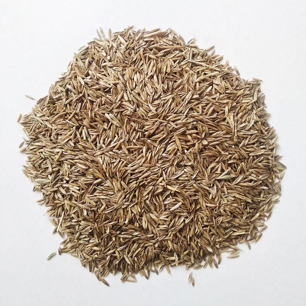 Семена райграса многолетнего