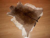 Шкура косули (серая), фото 1