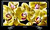 Телевизор Sony KD75XG8096BR2 (Официальный ТВ, Настройка + Проверка)