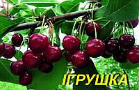 "Саженцы вишни ""Игрушка"""