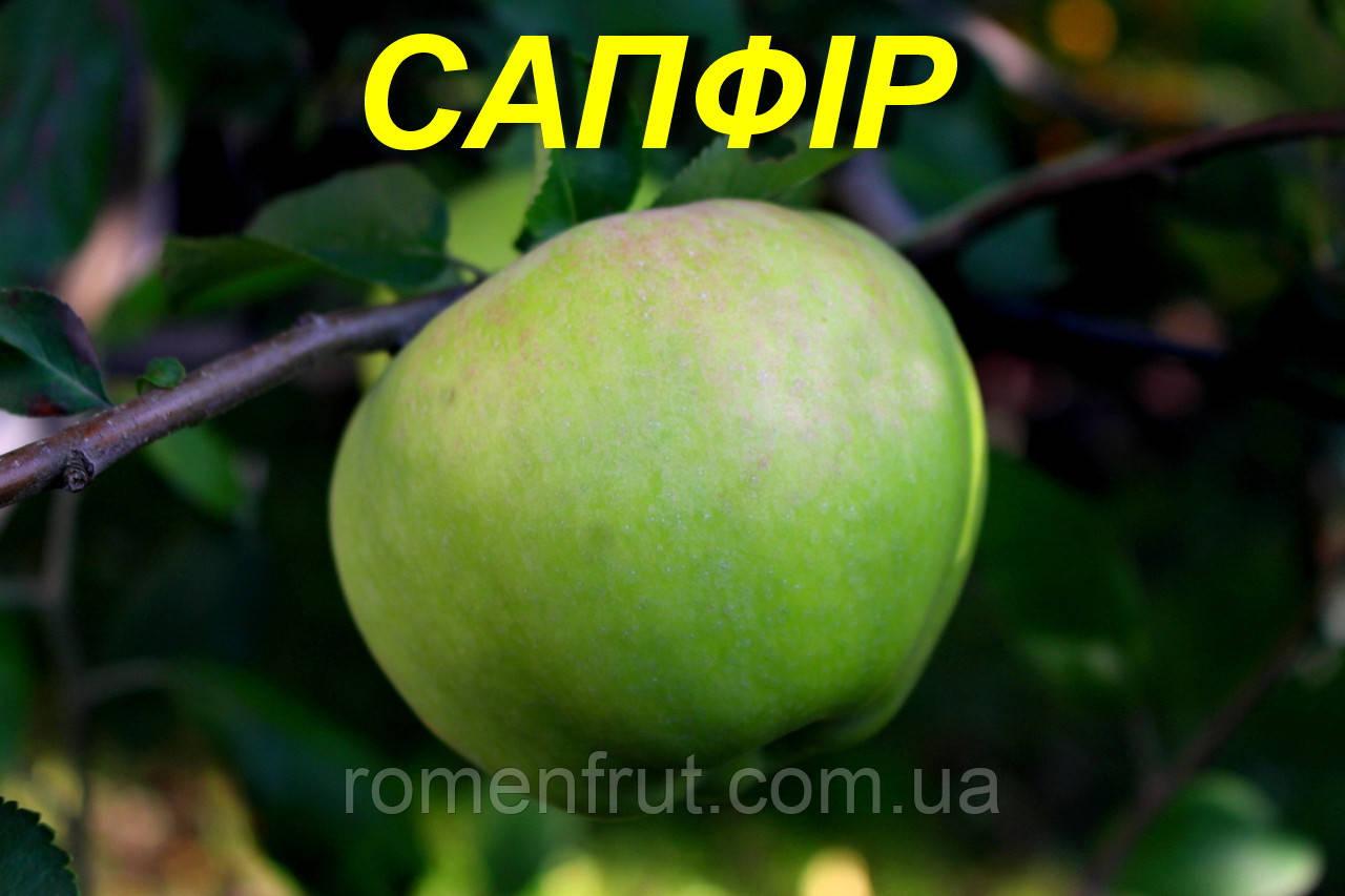 """Саженцы яблони """"Сапфир"""""""