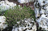 Ай-петри, коралловый камень, фото 1