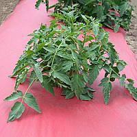 Мульчирующая пленка для томатов