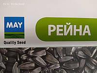 Семена подсолнечника РЕЙНА 95-100 дней. Устойчив до восьми расам заразихи А - Н. Май Агро Сид / Турция