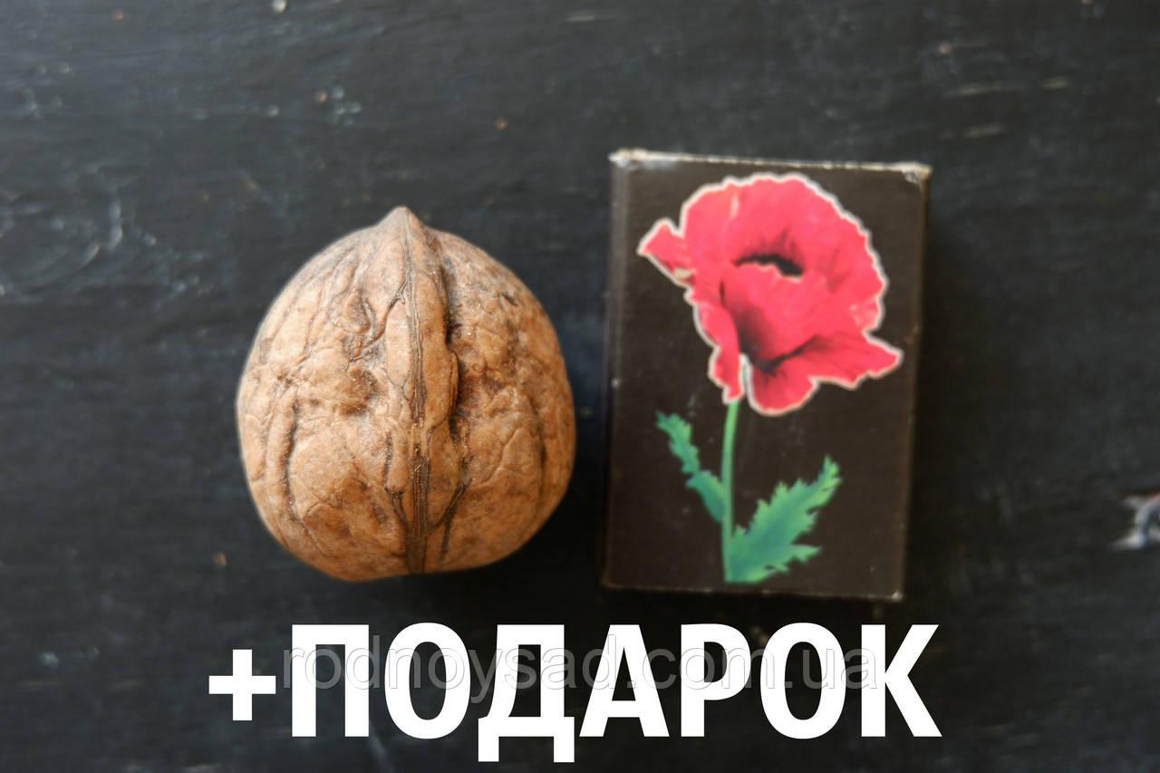 """Орех грецкий """"Песчанский"""" семена 10 шт для саженцев насіння волоський горіх на саджанці"""