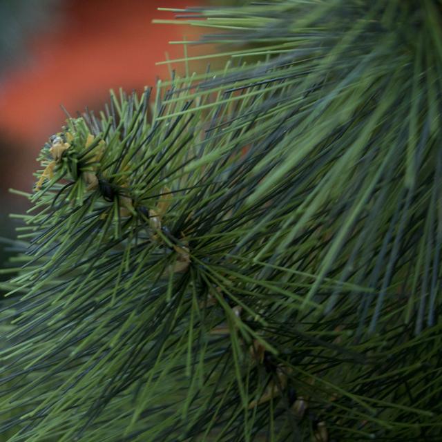 зеленая искусственная сосна