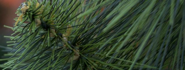 сосна искусственная зеленая