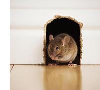 ловушки для грызунов, для крыс и мышей, фото