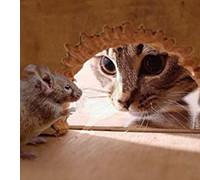 простые ловушки для крыс, для мышей, фото
