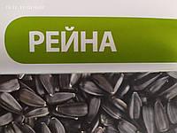 Засухостікий соняшник РЕЙНА МАЙ АГРО. Турецький гібрид РЕЙНА високоврожайний та олійний.