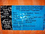Гібрид турецького врожайного соняшника СІРЕНА МС, Насіння стійке до 5 п'яти рас вовчка A-Е СИРЕНА МС, Май Сід., фото 7