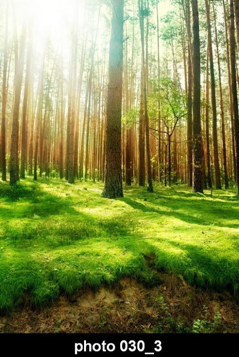 Настенный обогреватель-картина Лес 3
