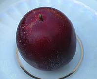 Алыча «Обильная». (Красно-фиолетовая крупноплодная). Подвой алыча., фото 1