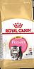 Корм Royal Canin Persian Kitten, для котят персидской породы, 0,4 кг