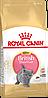 Корм Royal Canin British Shorthair Kitten, для котят британцев, 0,4 кг