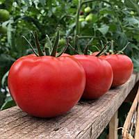 КЛАД F1 / KLAD F1 — томат индетерминантный, Lark Seeds 250 семян