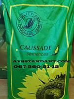 Урожайный подсолнечник ШАРКС 42ц/га, устойчив к семи расам заразихи A-G,  90-97дней, Румыния /  Коссад Семанс, фото 1