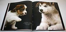 Жизнь собак Арнальдо де Лука, фото 3