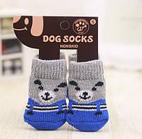 """Носки для собаки """"Мишка Blue"""". Одежда для собак"""