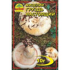 Мицелий гриба Груздь настоящий, 10 гр
