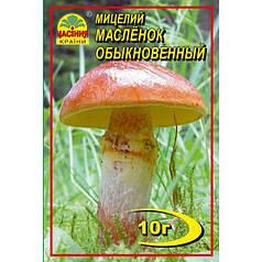 Мицелий гриба Масленок обыкновенный, 10 гр