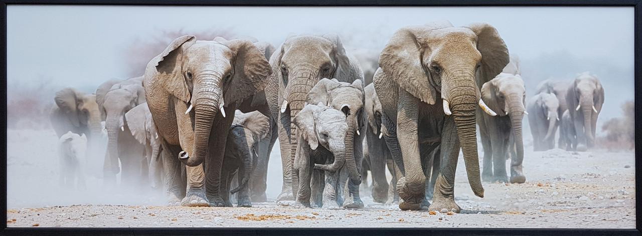 "Фотокартина в деревянной раме ""Elephants 4"", 50х140 см"